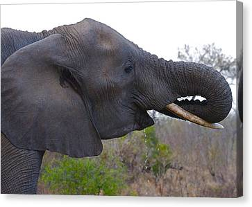 Elephant Having A Drink Canvas Print by Michael Blesius