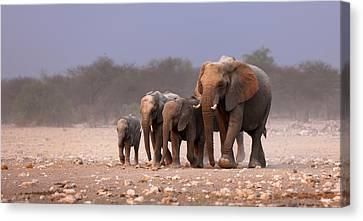 Elephant Herd Canvas Print by Johan Swanepoel