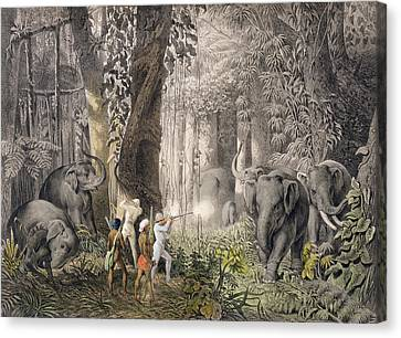 Elephant Hunt In The Region Of Logalla Canvas Print by Graf Emanuel Andrasy