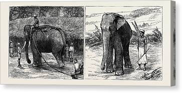 Elephant Hunting In Ceylon Left Image A Tame Elephant Canvas Print by English School