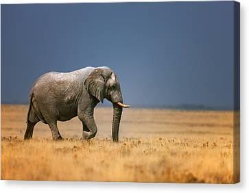 Elephant In Grassfield Canvas Print by Johan Swanepoel