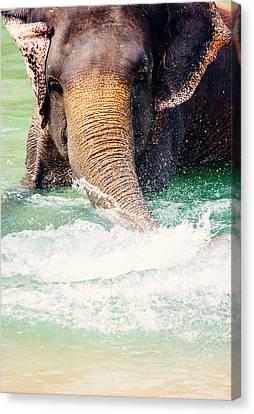 Elephant Splash Canvas Print by Pati Photography
