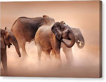 Elephants In Dust Canvas Print by Johan Swanepoel