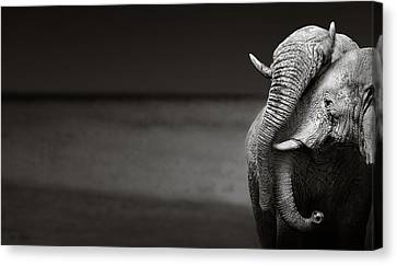 Elephants Interacting Canvas Print by Johan Swanepoel