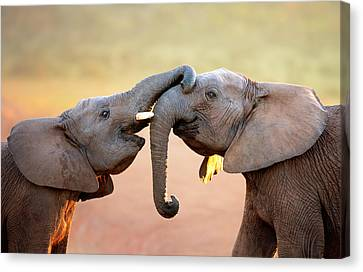 Elephants Touching Each Other Canvas Print by Johan Swanepoel