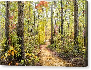 Elfin Forest Canvas Print by Debra and Dave Vanderlaan
