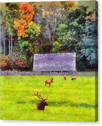 Elk In Cataloochee Valley Canvas Print by Dan Sproul