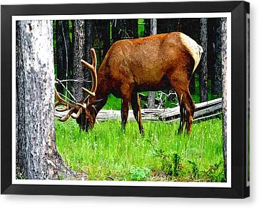 Elk In Montana Canvas Print by Larry Stolle