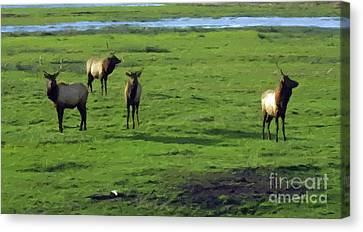 Elk  Canvas Print by Larry Stolle