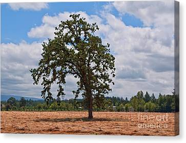 Elm Tree In Hay Field Art Prints Canvas Print by Valerie Garner
