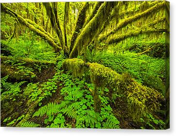 Emerald Hoh Canvas Print by Joseph Rossbach