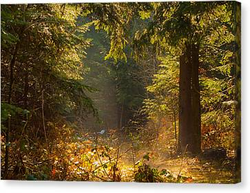 Enchanted Forest Canvas Print by Evgeni Dinev