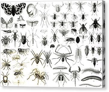Entomology Myriapoda And Arachnida  Canvas Print by English School