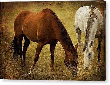 Equine Friends Canvas Print by Theresa Tahara