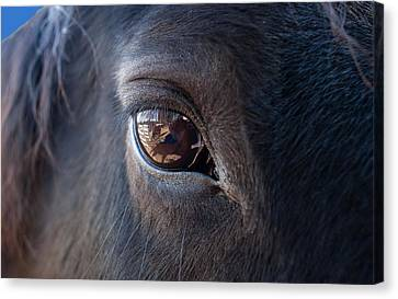 Equine In Sight Canvas Print by Sheryl Cox