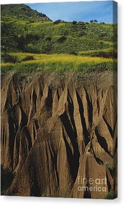 Erosion In Malibu California Canvas Print by Richard R Hansen