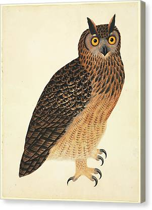 Eurasian Eagle-owl Canvas Print by Natural History Museum, London