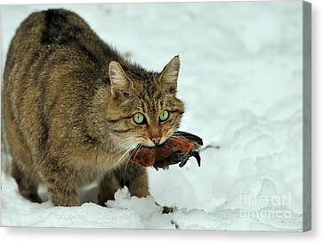 European Wildcat Canvas Print by Reiner Bernhardt