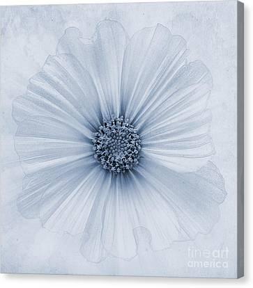 Evanescent Cyanotype Canvas Print by John Edwards