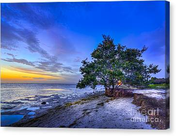 Evening Delight Canvas Print by Marvin Spates
