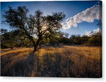 Evening Light Canvas Print by Peter Tellone