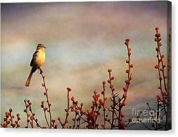 Evening Mocking Bird Canvas Print by Darren Fisher