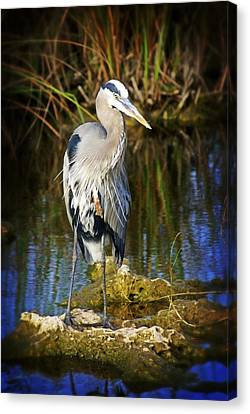 Everglades Blue Canvas Print by Marty Koch