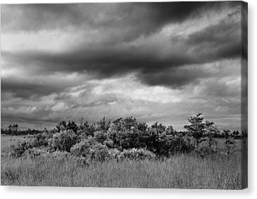 Everglades Storm Bw Canvas Print by Rudy Umans