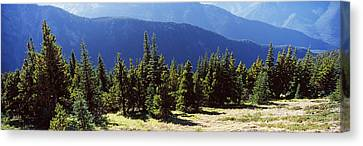 Evergreen Trees With Mountains Canvas Print by Panoramic Images