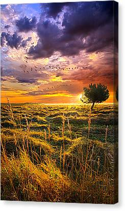 Every Story Has A Beginning Canvas Print by Phil Koch