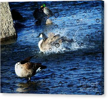 Everyone Duck II Canvas Print by Bobbee Rickard
