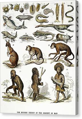 Evolution Chart Canvas Print by Granger