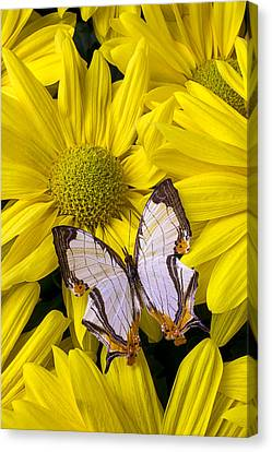 Exotic Butterfly Canvas Print by Garry Gay