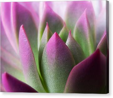 Exotic - Pink Purple Green Flower Landscape Photograph Canvas Print by Artecco Fine Art Photography