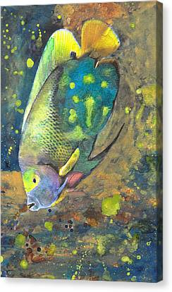 Exploring The Reef Canvas Print by Susan Powell