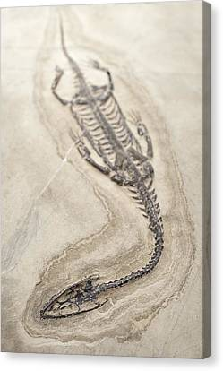 Extinct Triassic Reptile Canvas Print by Science Photo Library