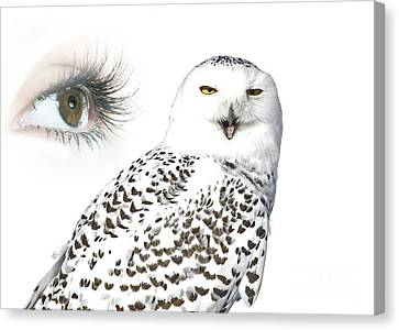 Eye Of Purity And The Mysterious Snowy Owl  Canvas Print by Inspired Nature Photography Fine Art Photography