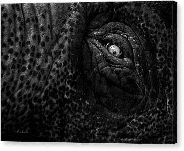 Eye Of The Elephant Canvas Print by Bob Orsillo