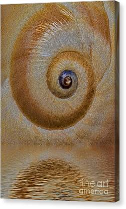 Eye Of The Snail Canvas Print by Susan Candelario