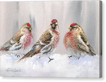 Snowy Birds - Eyeing The Feeder 2 Alaskan Redpolls In Winter Scene Canvas Print by Karen Whitworth
