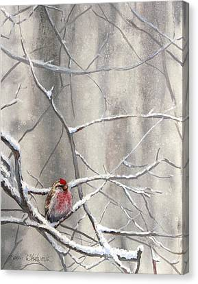 Eyeing The Feeder Alaskan Redpoll In Winter Canvas Print by Karen Whitworth