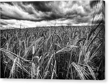 Facing The Storm Canvas Print by John Farnan