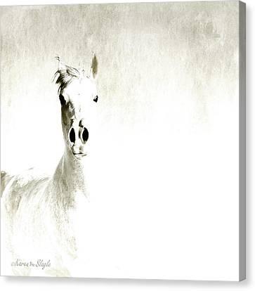 Fade To White Canvas Print by Karen Slagle