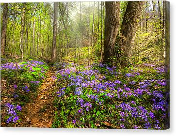 Fairies Forest Canvas Print by Debra and Dave Vanderlaan