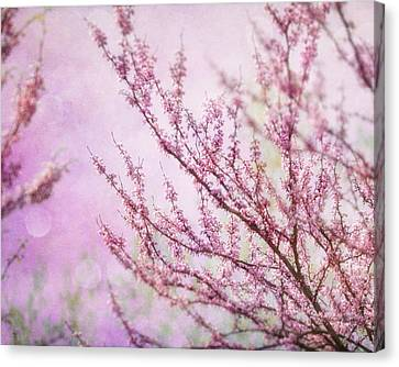 Fairytale Redbud In Pink Canvas Print by Lisa Russo