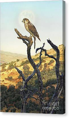 Falcon In The Sunset Canvas Print by Stu Shepherd