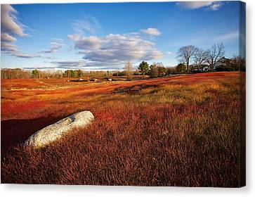 Fall Blueberry Barrens Canvas Print by Don Seymour