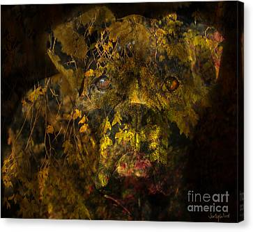 Fall Boxer Canvas Print by Judy Wood