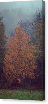 Fall Colors Canvas Print by Adam Caron