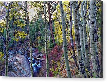 Fall Creek Canvas Print by Scott McGuire
